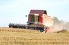 Im Fokus: Getreideernte. Foto: Peter Gaß